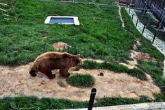 NIEDŹWIADKOWY sanktuarium blisko Prishtina dla wszystko Kosovo's prywatnie utrzymywał brown niedźwiedzi Fotografia Stock