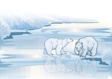 niedźwiedź biegunowy Fotografia Royalty Free