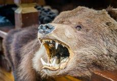 Niedźwiedź brunatny skóry dywanik z its głową fotografia stock