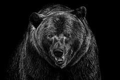 Niedźwiedź lubi target532_0_ obraz stock