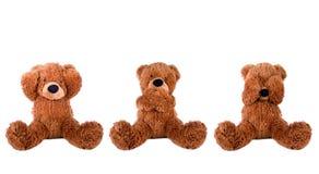 niedźwiedź mądry trzy zdjęcia stock