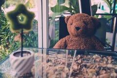 niedźwiedź odizolowywający nad siedzącym miś pluszowy biel Obrazy Royalty Free