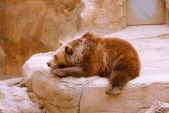 Niedźwiedź odpoczywa na kamieniu w zoo obraz stock