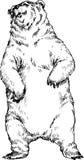 niedźwiedź rysująca ręka Obraz Royalty Free