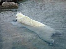 niedźwiedź się odprężyć Obrazy Stock