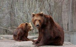 niedźwiedź skała Obrazy Stock