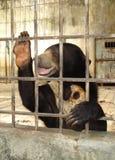 Niedźwiedź w więzieniu Fotografia Royalty Free