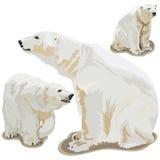 Niedźwiedzie polarni Obrazy Royalty Free