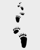 Niedźwiadkowi kroki Zdjęcia Royalty Free