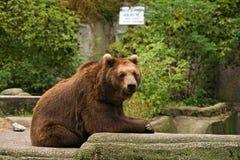 niedźwiadkowy target1776_0_ Zdjęcie Stock