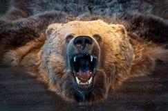 Niedźwiadkowy trofeum Obraz Royalty Free