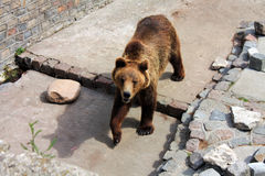 niedźwiadkowy zoo Fotografia Stock