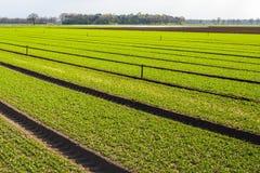 Niedawne siać rośliny w polu ogrodniczy gospodarstwo rolne zdjęcia stock