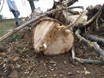 Niedergeworfener Baum Lizenzfreies Stockfoto