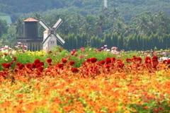 Niederländische Art der Windmühle im Blumenkaimanfisch Stockbilder