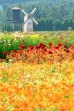 Niederländische Art der Windmühle im Blumenkaimanfisch Lizenzfreie Stockfotos