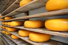 Niederländische ganze Käse auf hölzerne Regale Stockbild