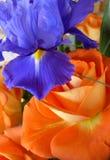 Niederländische Iris hollandica Abschluss oben in einem Blumenstrauß von Rosen Lizenzfreie Stockfotografie