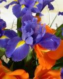 Niederländische Iris hollandica Abschluss oben in einem Blumenstrauß von Rosen Lizenzfreie Stockfotos