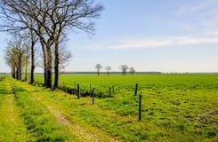 Niederländische ländliche Landschaft im Frühjahr mit einem langen Gras-bedeckten Weg w Stockfoto