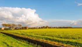 Niederländische ländliche Landschaft mit gelbem blühendem Rapssamen Lizenzfreie Stockfotografie