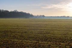 Niederländische ländliche Landschaft mit Nebel über Ackerland Achterhoek Gelde Lizenzfreie Stockbilder