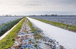 Niederländische Landschaft im Winter Lizenzfreie Stockfotografie