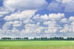 Niederländische Landschaft mit einer Baumreihe, blauer Himmel, drastische geformte Wolken Stockbilder