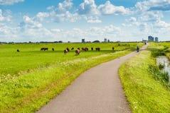Niederländische Landschaft mit Radfahrern lizenzfreie stockfotografie