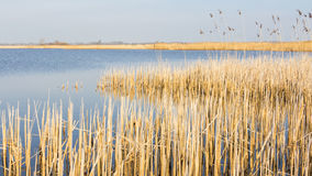 Niederländische Landschaft mit Schilf Lizenzfreie Stockfotos