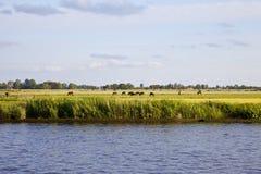 Niederländische Landschaft mit Wasser und Pferden Lizenzfreie Stockfotografie