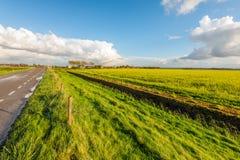 Niederländische Landstraße neben einem Feld mit blühendem Rapssamen Stockbild