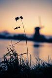 Niederländische Mühlen auf Sonnenaufgang Stockfotografie