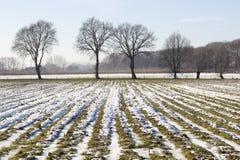 Niederländische Maisforderung durchgesetzt im Schnee und im Winter eingefroren Stockbilder