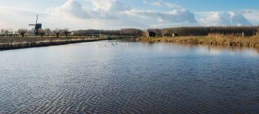 Niederländische Polderlandschaft mit Schwänen und Mühle Stockbild