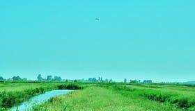 Niederländische Sommer-Wiese und Damm mit Schnepfe lizenzfreies stockbild