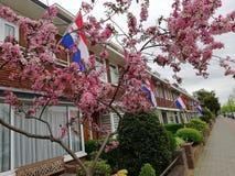 Niederländische Straße mit Flaggen auf Königen Day lizenzfreie stockbilder