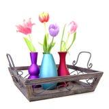 Niederländische Tulpen in den bunten Vasen auf Behälter Stockbilder