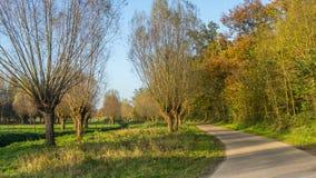 Niederländische Weidenlandschaft Lizenzfreies Stockbild