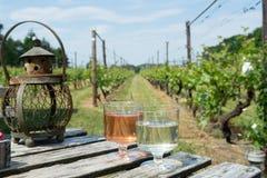 Niederländische Weinkellerei, Weiß und rosafarbene Weinprobe auf Weinberg in Brabant stockfotografie