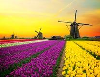 Niederländische Windmühle über Tulpenfeld lizenzfreie stockfotografie