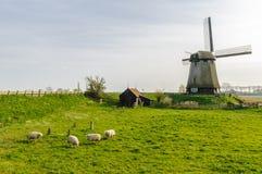 Niederländische Windmühle steht auf einem Aufstieg, während vier Schafe auf dem Abhang in den Niederlanden weiden lassen Stockfotos
