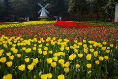 Niederländische Windmühle und Tulpen Stockfotos