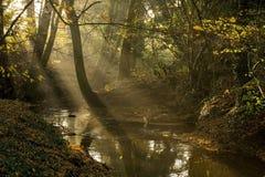 Niederländischer Bach in der Herbstnachmittagssonne stockfoto