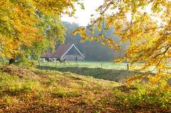 Niederländischer Bauernhof mit Kühen Stockfotografie