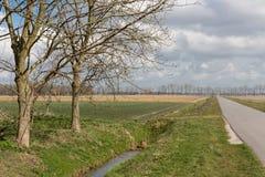 Niederländisches Ackerland mit bloßen Bäumen im Frühjahr Stockbild
