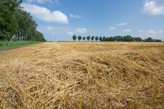 Niederländisches Ackerland mit geerntetem Weizen Stockbilder