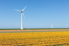 Niederländisches Ackerland mit gelbem Tulpenfeld und großem windturbine Stockfotografie