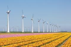 Niederländisches Ackerland mit gelbem Tulpenfeld und großem windturbine Lizenzfreie Stockbilder