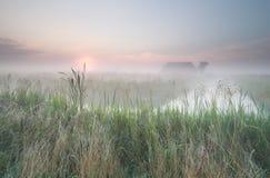Niederländisches nebelhaftes Ackerland Stockbilder